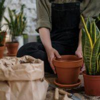 Plantenbakken kopen
